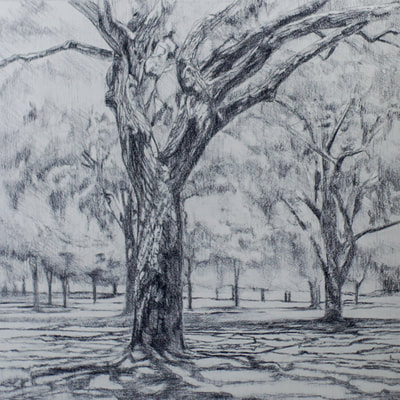 landscape charcoal drawing by Nicole Lamothe, Apollo Beach, Florida artist